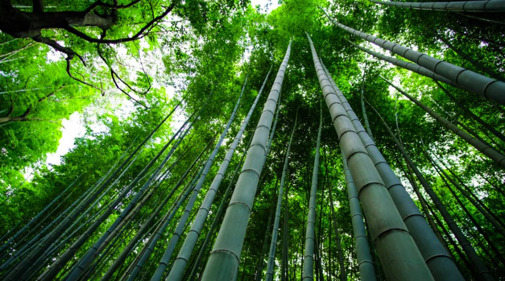 THE BAMBOO-CUTTER AND THE MOON-CHILD